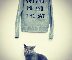 cat, need, and quotes image