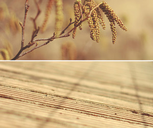 bokeh, decking, and growth image