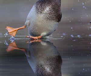 Image by Sephira Santander