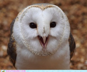 owl, cute, and squee image