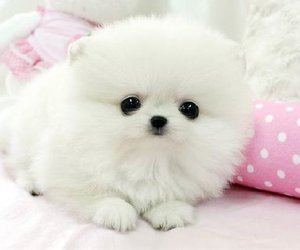 fluffy, teacup, and cute image