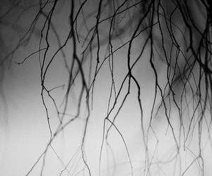 black and white and twigs image