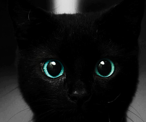 alice in wonderland, cat, and eyes image