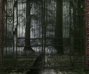 gate, forest, and tree image