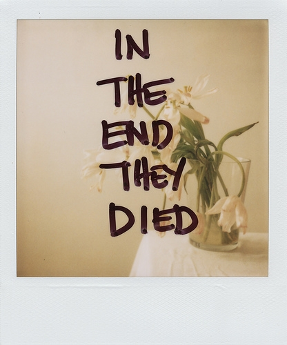 flowers, polaroid, and text image
