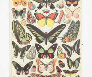 butterfly and poster image