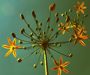 beautiful, flower, and photography image