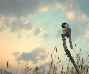 bird, clouds, and photography image