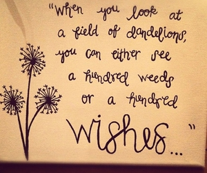 quotes, wish, and dandelion image