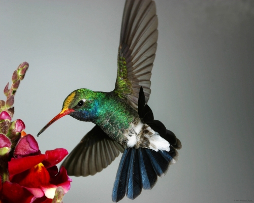 bird and hummer image