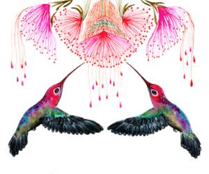 beija-flor image