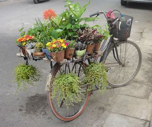 flowers, bike, and plants image