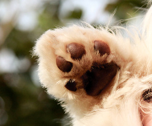 cute, dog, and paw image