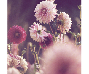 :), fashion, and flower image