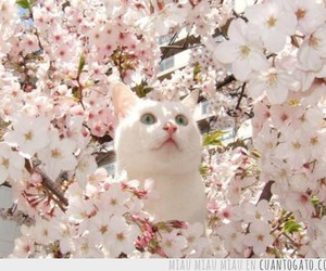 cat, cherry, and pink image