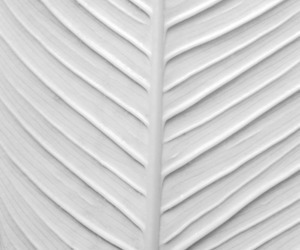 white and leaf image