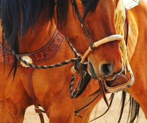 equestrian, horse, and riding image