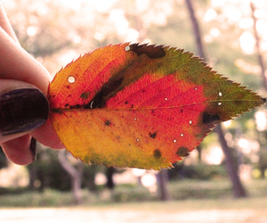 autumn, blog, and colors image