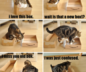 cat, box, and funny image