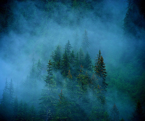 blue, forest, and photography image