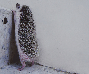adorable, animal, and fuzzy image