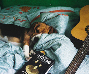 dog, guitar, and book image