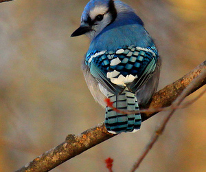 bird, nature, and blue image