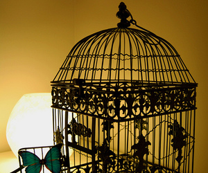 butterfly, vintage, and bird cage image