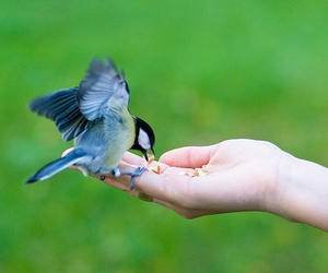 accept, tit, and bird image