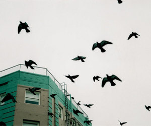 birds and building image
