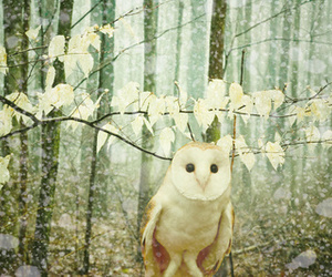 beautiful, forest, and owl image