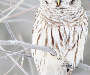 amazing, brown, and owl image