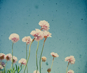 flowers, sky, and vintage image