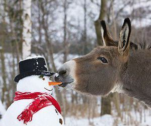 donkey, snow, and snowman image