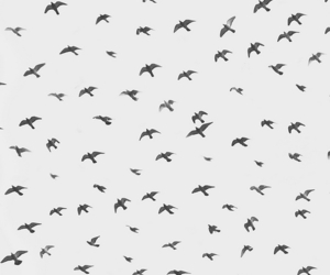 bird, fly, and background image