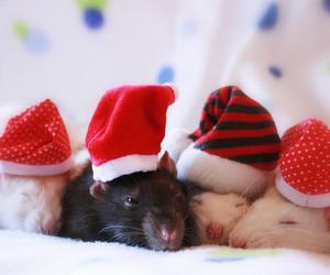 animals, bolinhas, and christmas image