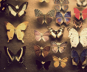 butterflies, photography, and collection image