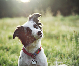 awesome, border collie, and dog image