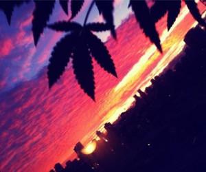 420 and marijuana image