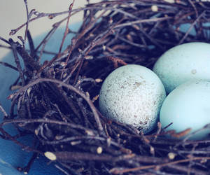 beautiful, blue, and eggs image