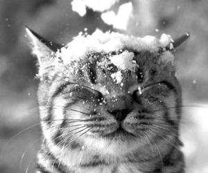 cute, cats, and snow image