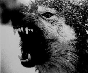 angry, dogs, and wolf image