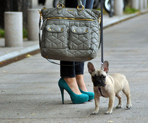 dog, fashion, and bag image