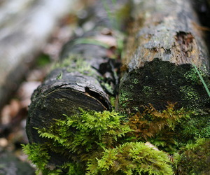forest, moss, and wood image