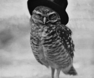 owl, hat, and black and white image