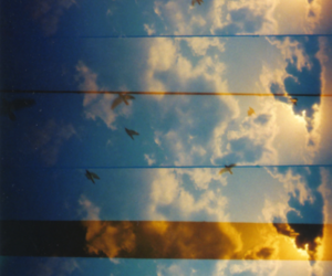 amazing, sky, and bird image