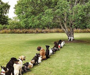 dog, funny, and tree image