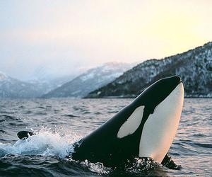 whale, animal, and sea image