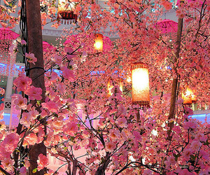 pink, cherry blossom tree, and nature image