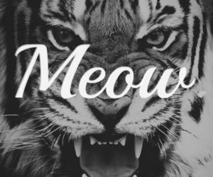 meow, tiger, and cat image